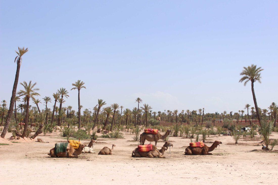 marrakech_palmeral_dalalba_10